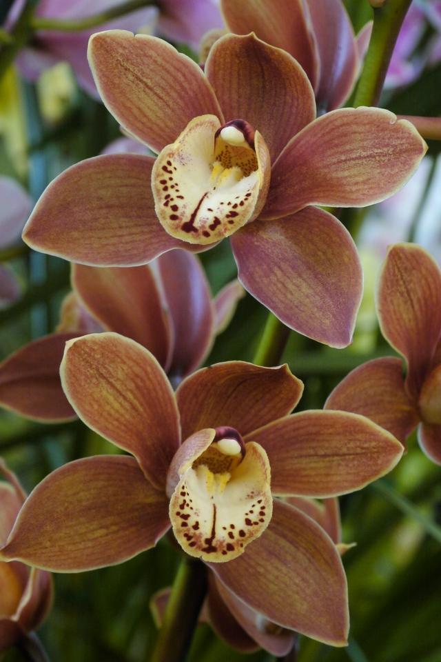 20120915_1216_3507 orchids