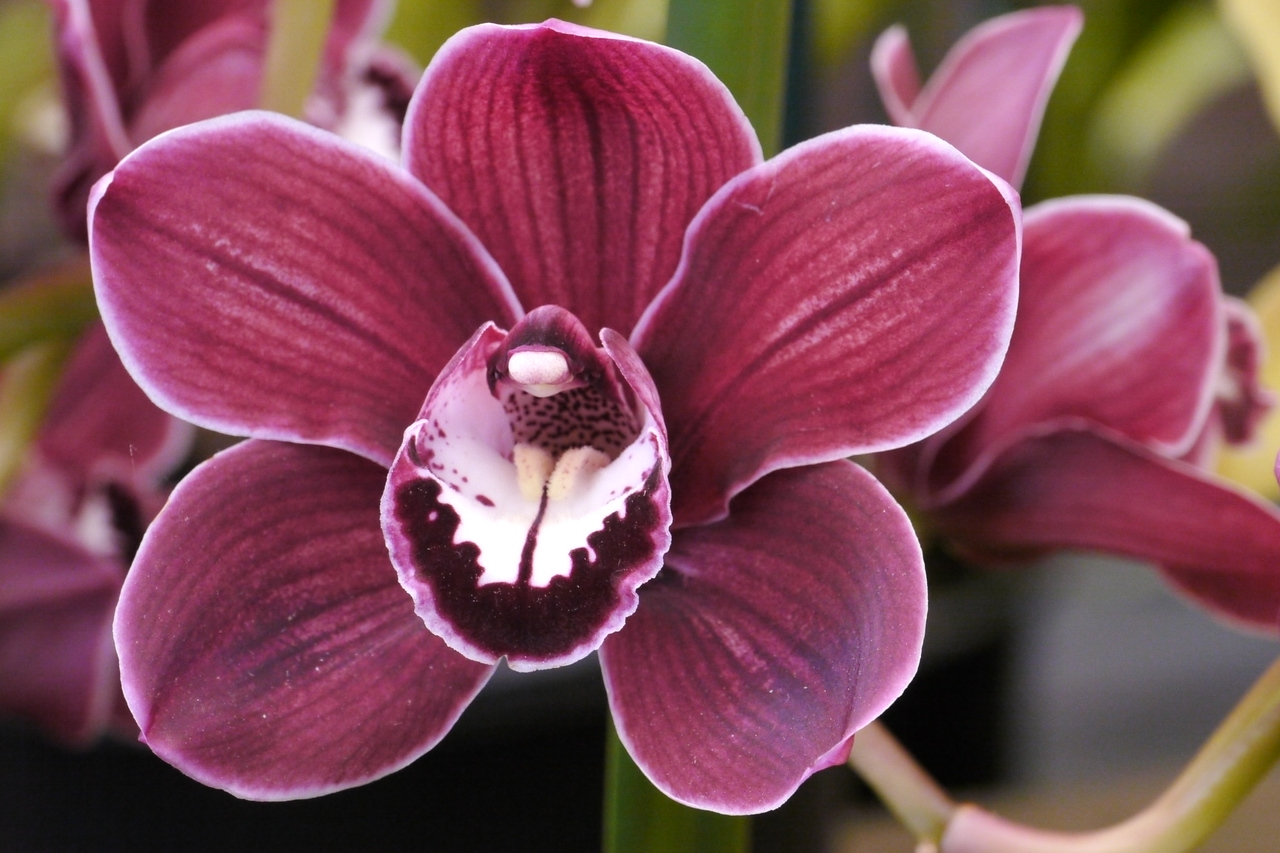 20120915_1225_3516  orchid