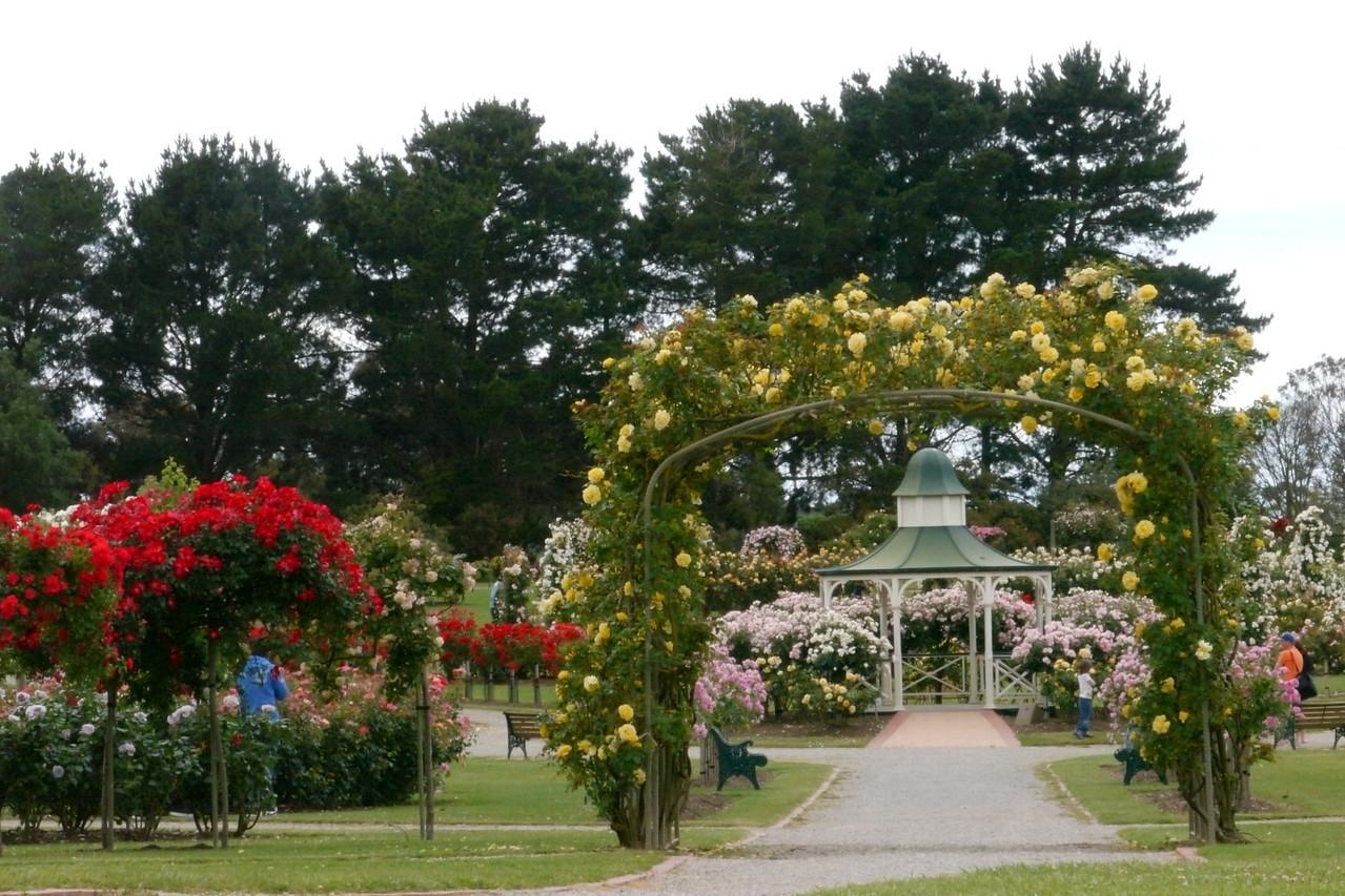 20121117_1241_4883 State Rose Garden, Werribee
