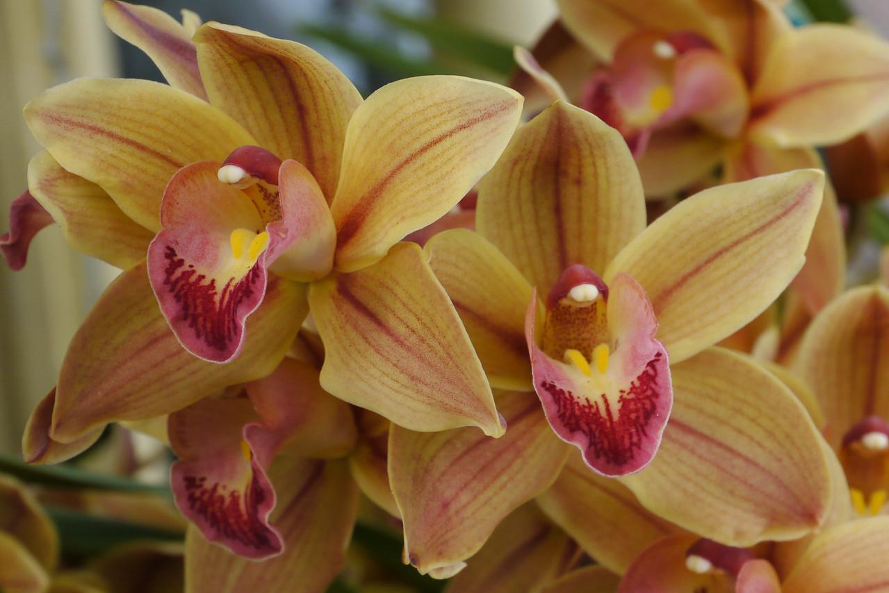 20120915_1141_3467 orchids