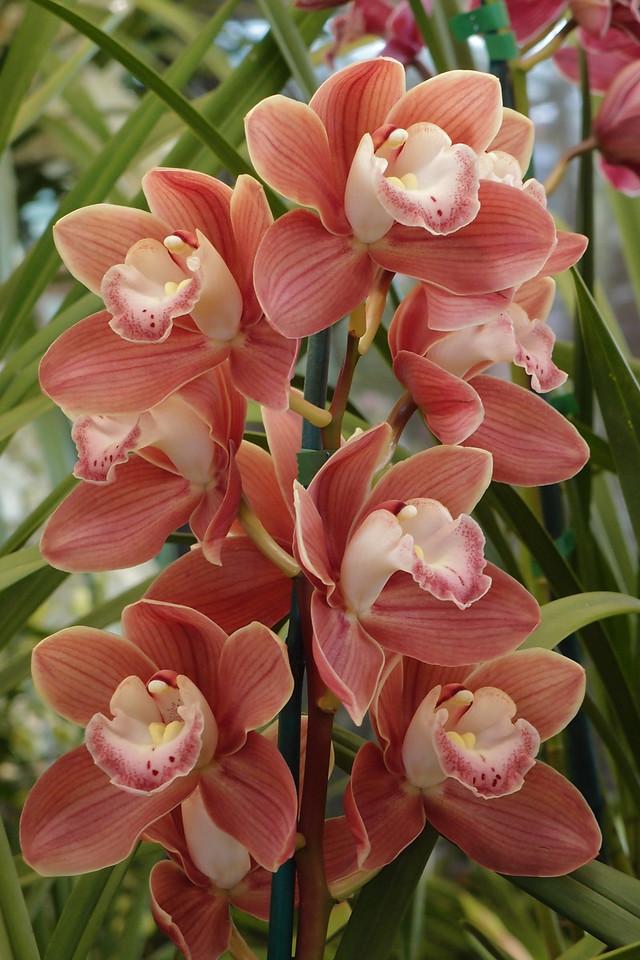 20120915_124_5121 orchids