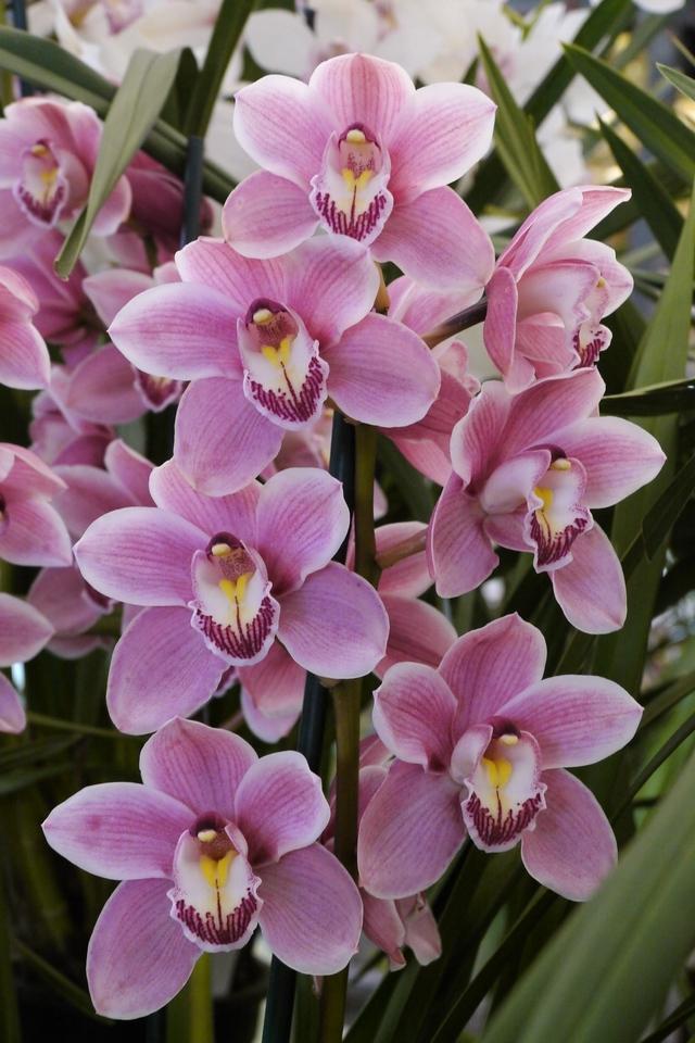 20120915_1408_3619 orchids