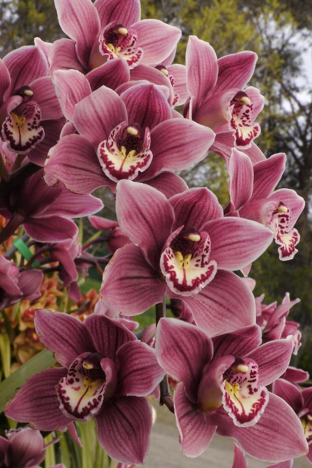 20120915_1439_3630 orchids