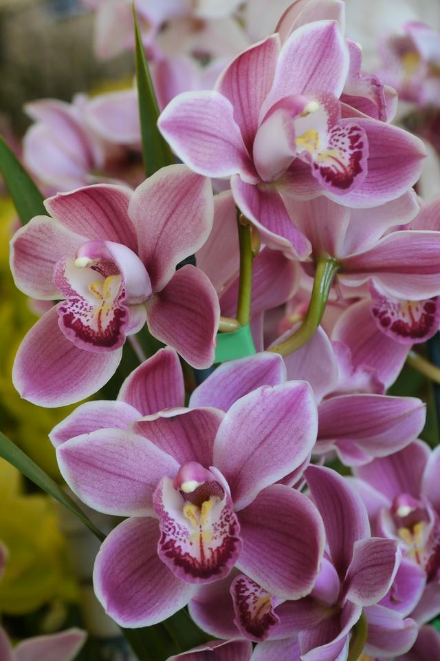20120915_1205_3493 orchids