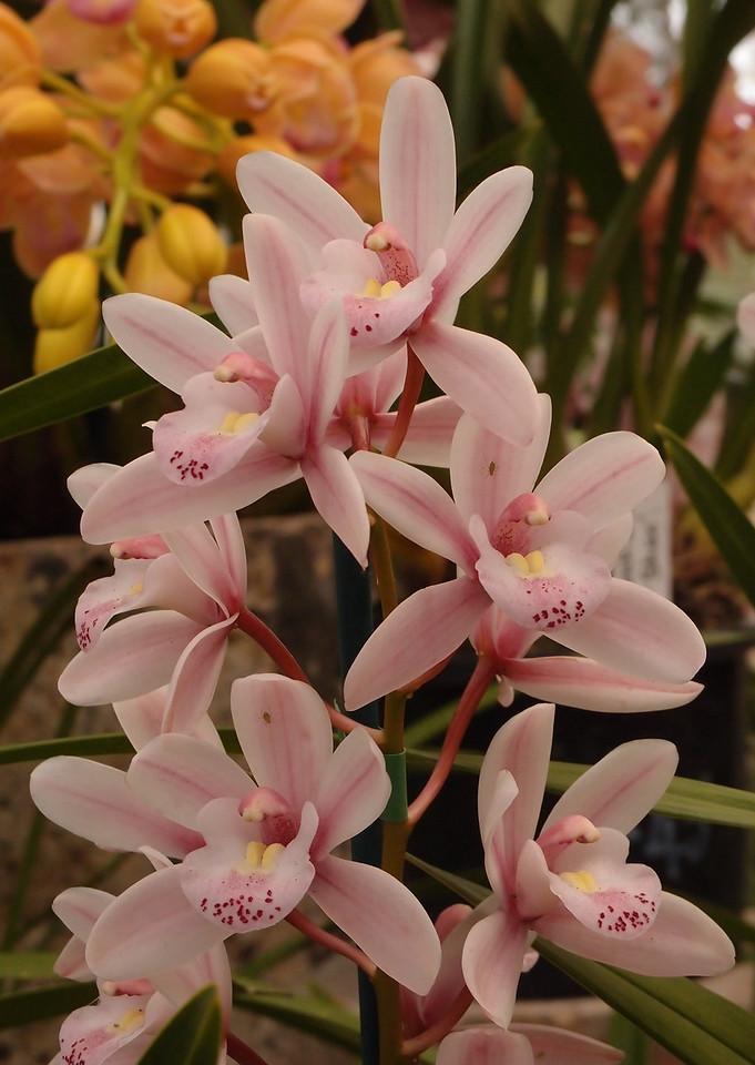 20120915_1527_5145 orchids