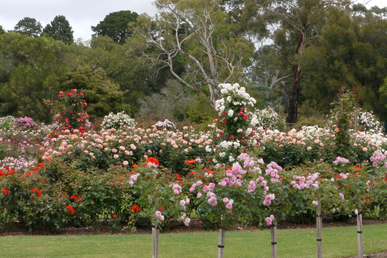 20121117_1020_4807 State Rose Garden, Werribee