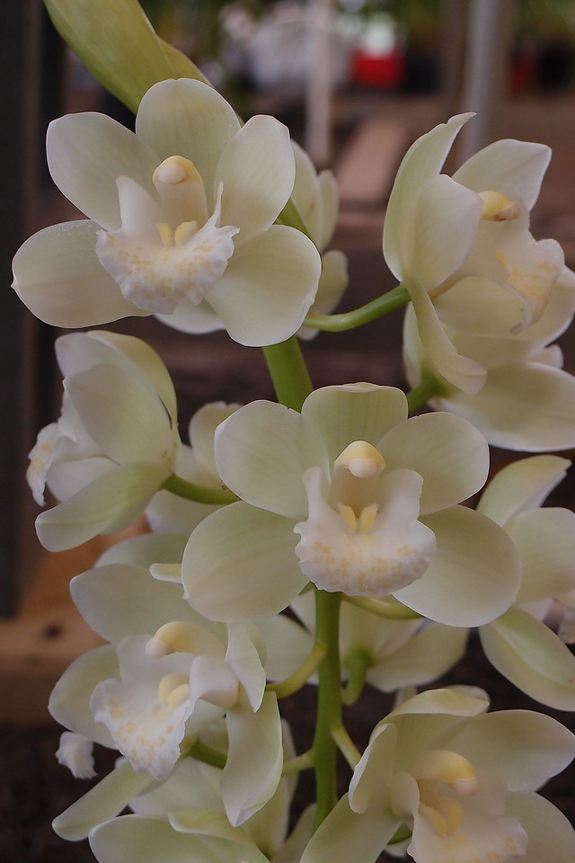 20120915_1148_5083 orchid