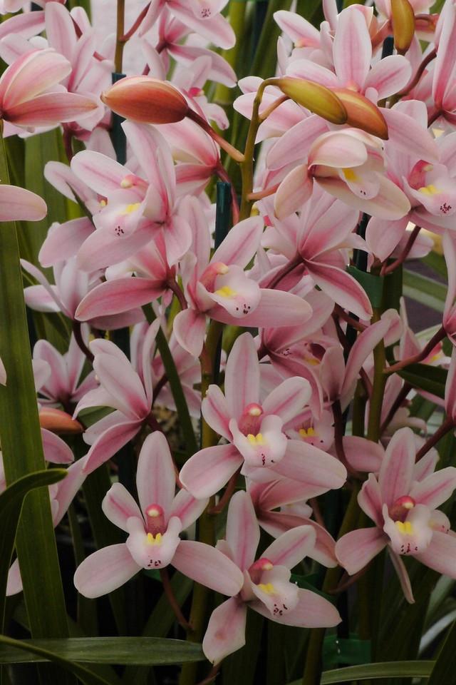 20120915_1242_3538 orchids