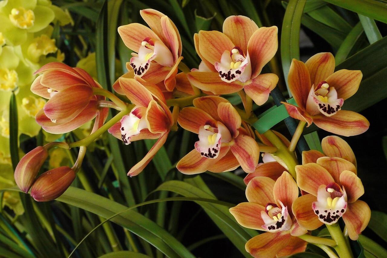 20120915_1245_3539  orchids