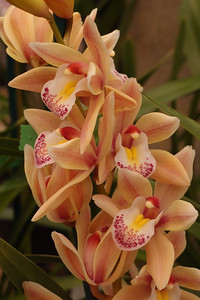 20120915_1534_5150 orchid