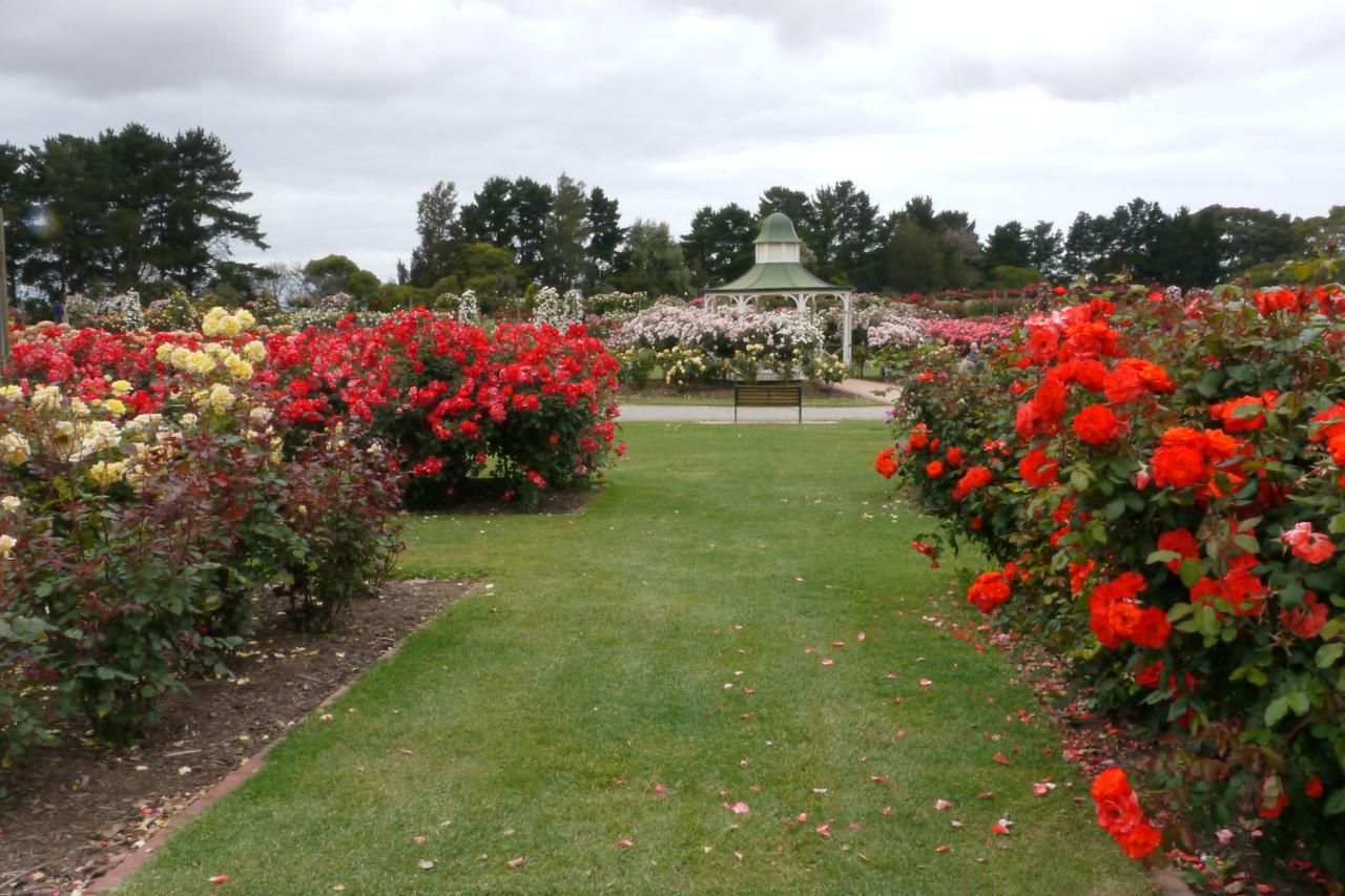 20121117_1016_4805 State Rose Garden, Werribee