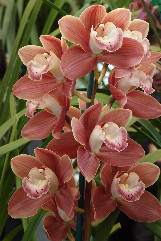 20120915_1237_5111 orchids