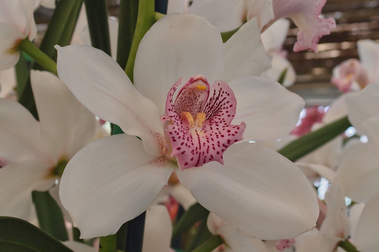 20120915_1151_5085 orchid