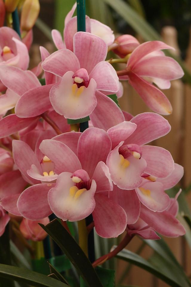 20120915_1227_5098 orchids