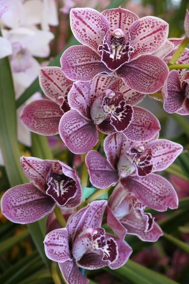 20120915_1204_3491 orchids