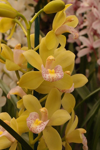 20120915_1528_5148 orchid