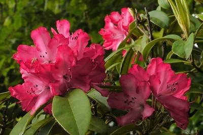 20121110_0838_4540 geranium