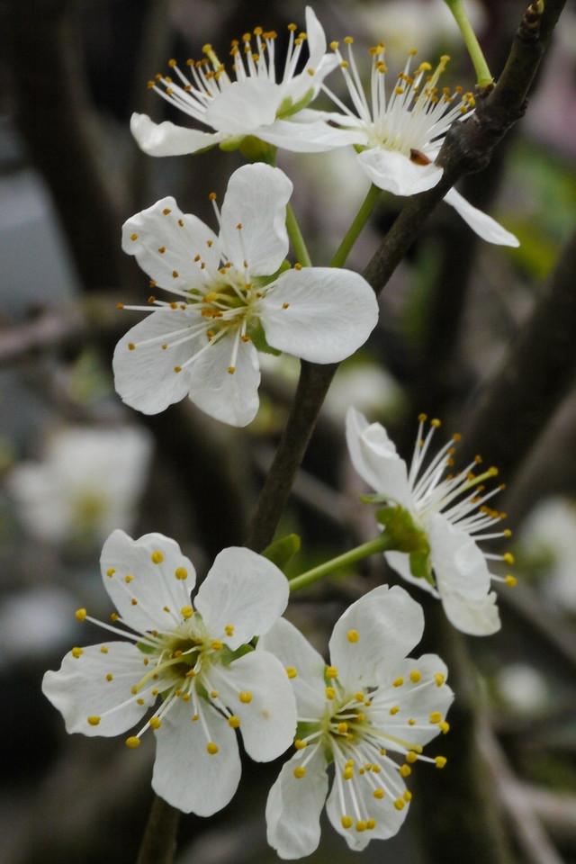 20120914_0805_3429 blossom