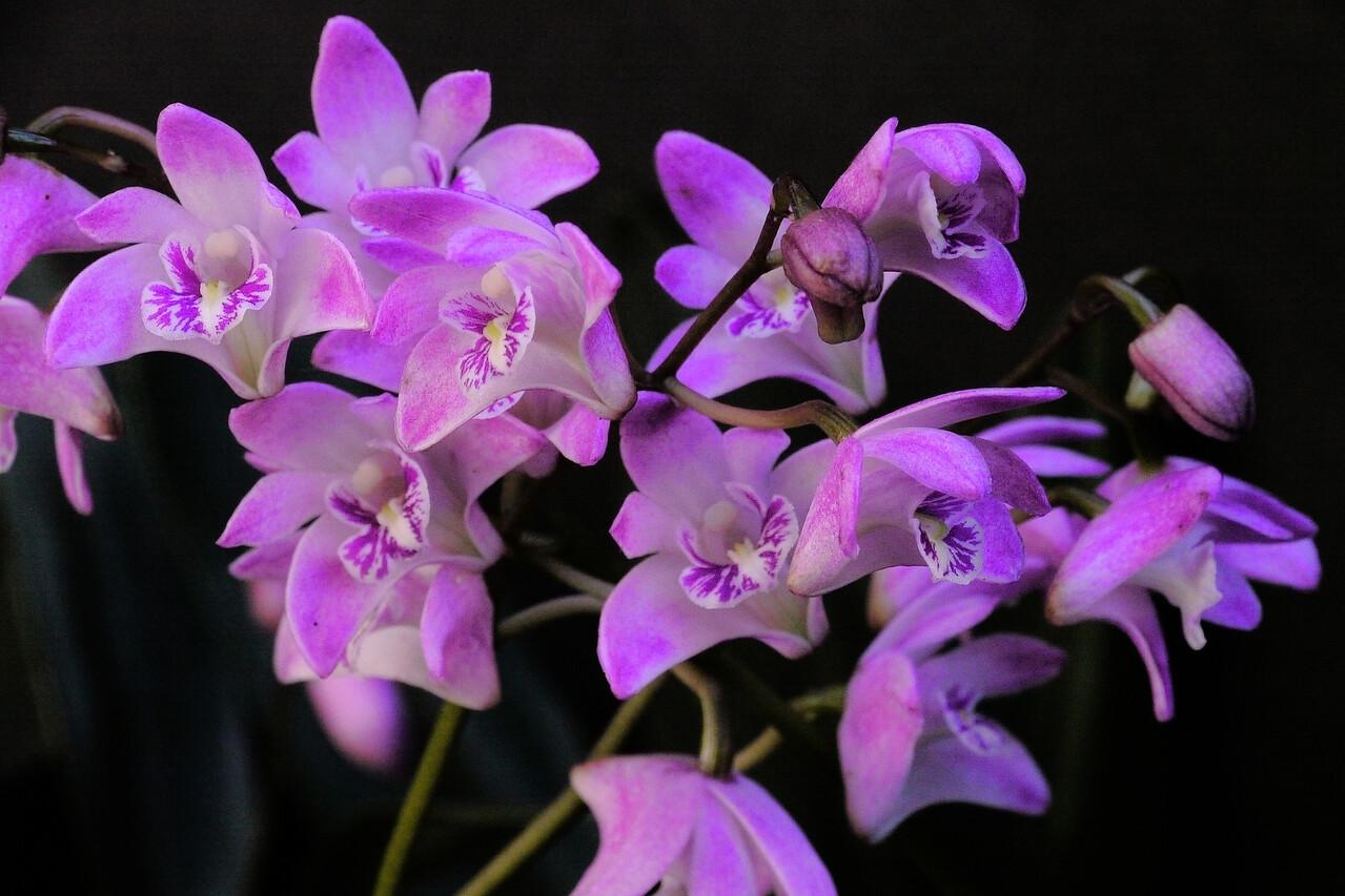 20120912_0952_3332 orchids