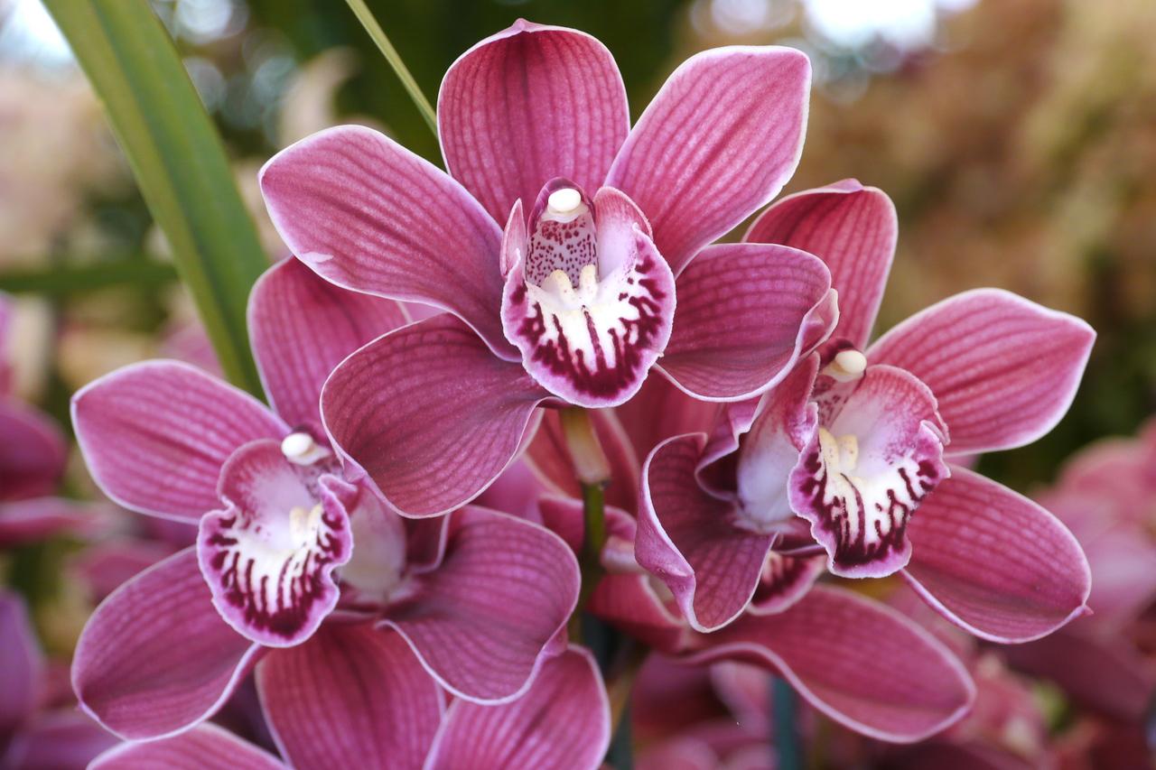 20120915_1206_3494 orchids