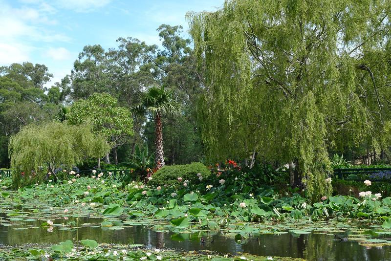 20120105_1409_6143 Blue Lotus Water Garden