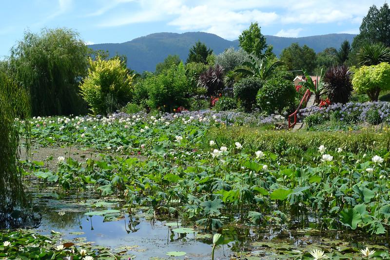 20120105_1443_6149 lotus