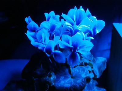 Blue Flowers long exposure
