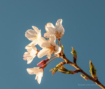2013-9-16 | Blossom