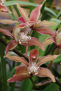 20130616_0915_8924 orchid