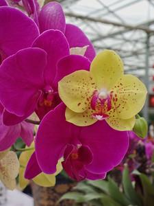 20130501_1718_0086 orchids. nursery in Xi'an
