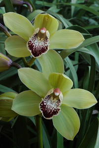 20130818_0846_9928 orchid
