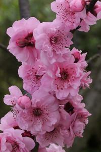 20130812_1211_9762 plum blossom
