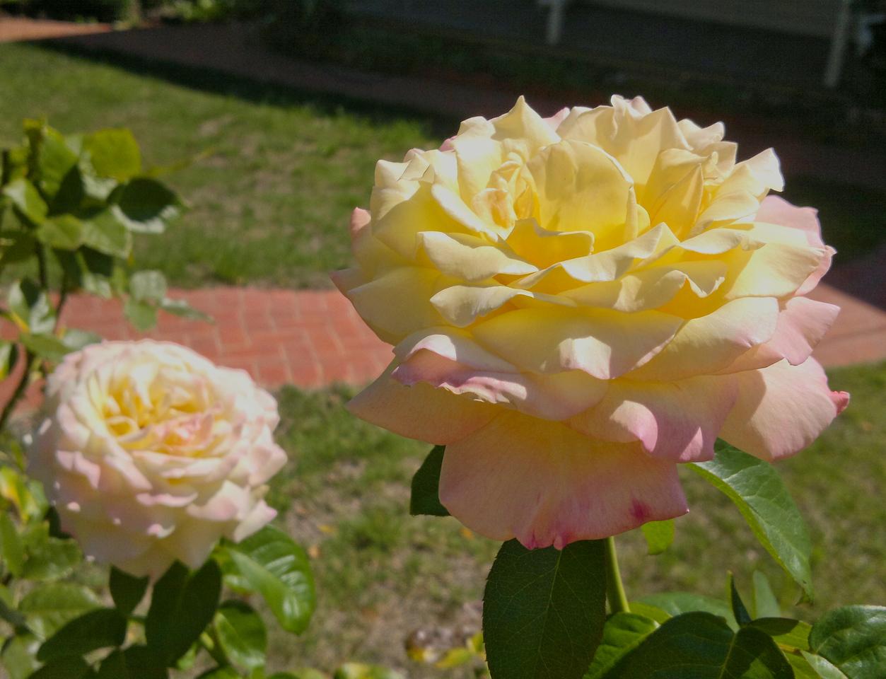 20130309_1153_041 roses