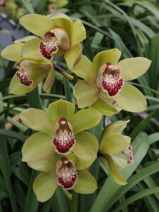 20130824_1554_0394 orchids
