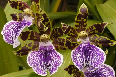 20130428_1152_8330 orchids