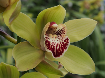 20130824_1601_0399 orchid