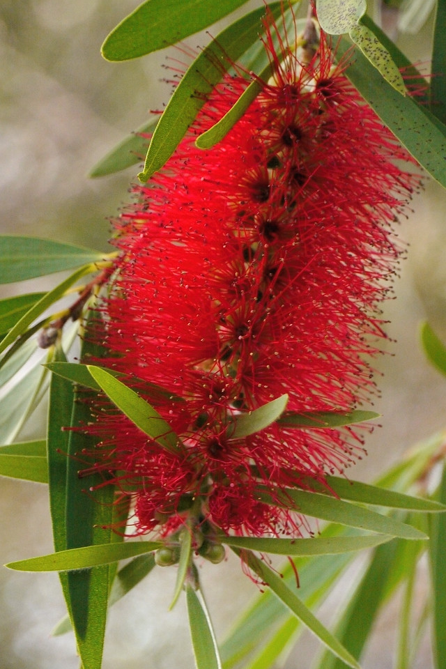 20130518_1712_8679 bottle brush