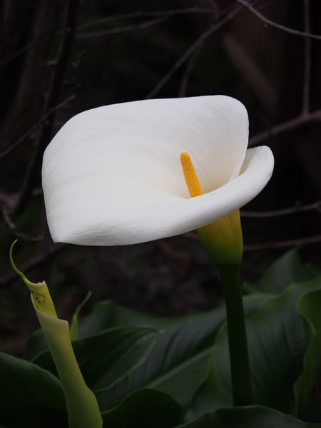20130803_1604_0001 lily