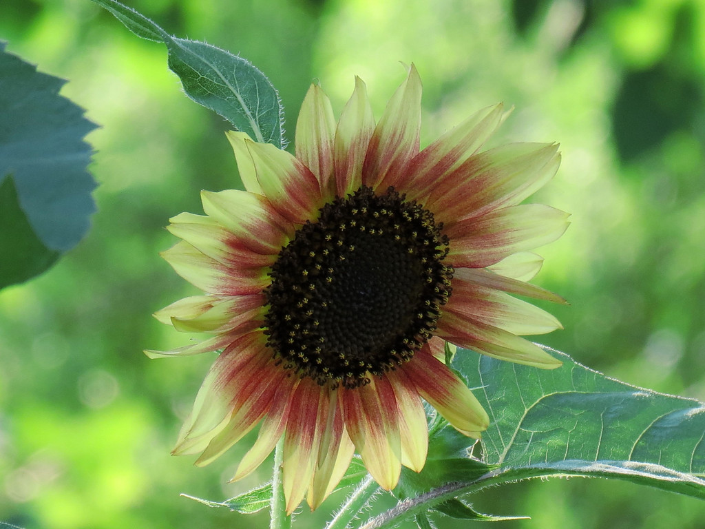 The Gold Finches have been landing on this flower to check it out.<br /> It is way over my head.