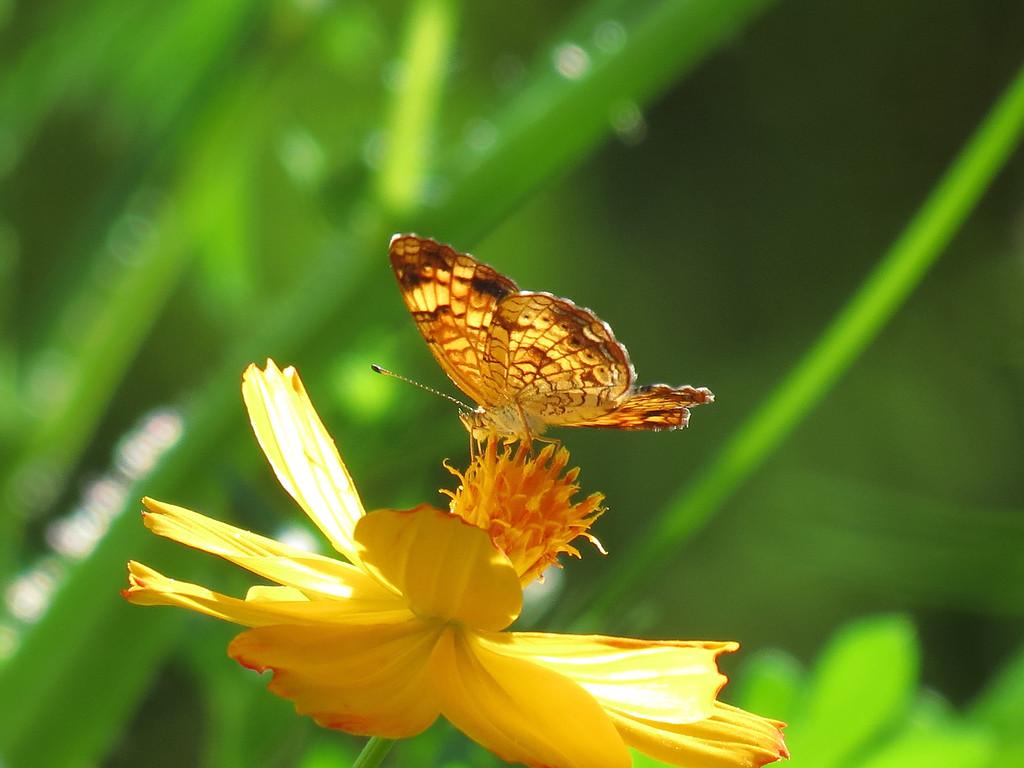 Sunlit Butterfly