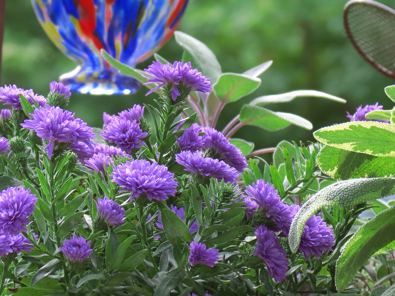 Asters, Purple Sage and Bi-color Sage in Becky's Flower Cart.