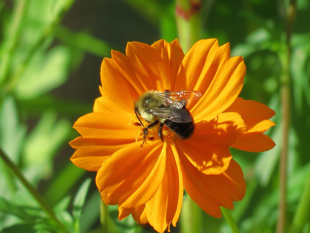Bee in Bright Sunlight.