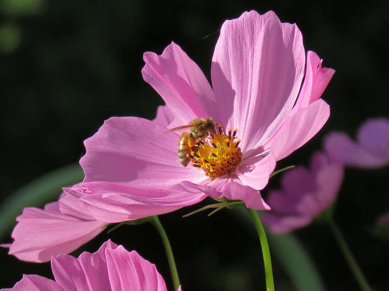 Honeybee on October 12.