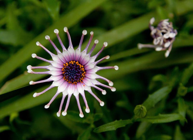 NY Botanical