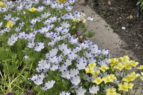 2013-Spring-Chicago-Botanic-Gardens