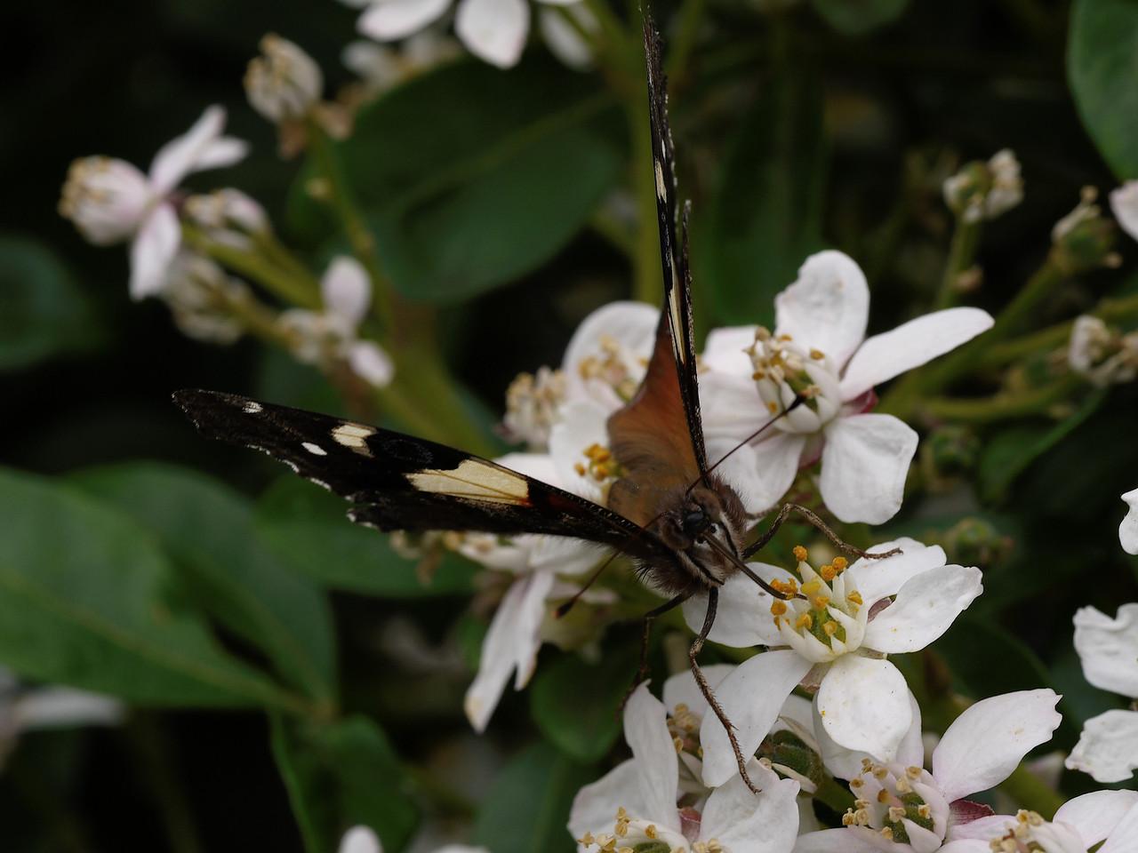 20130924_1118_0405 butterfly