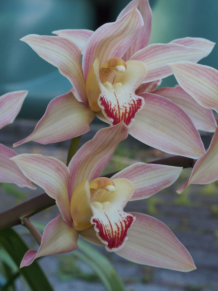 20131003_1703_4754 orchid