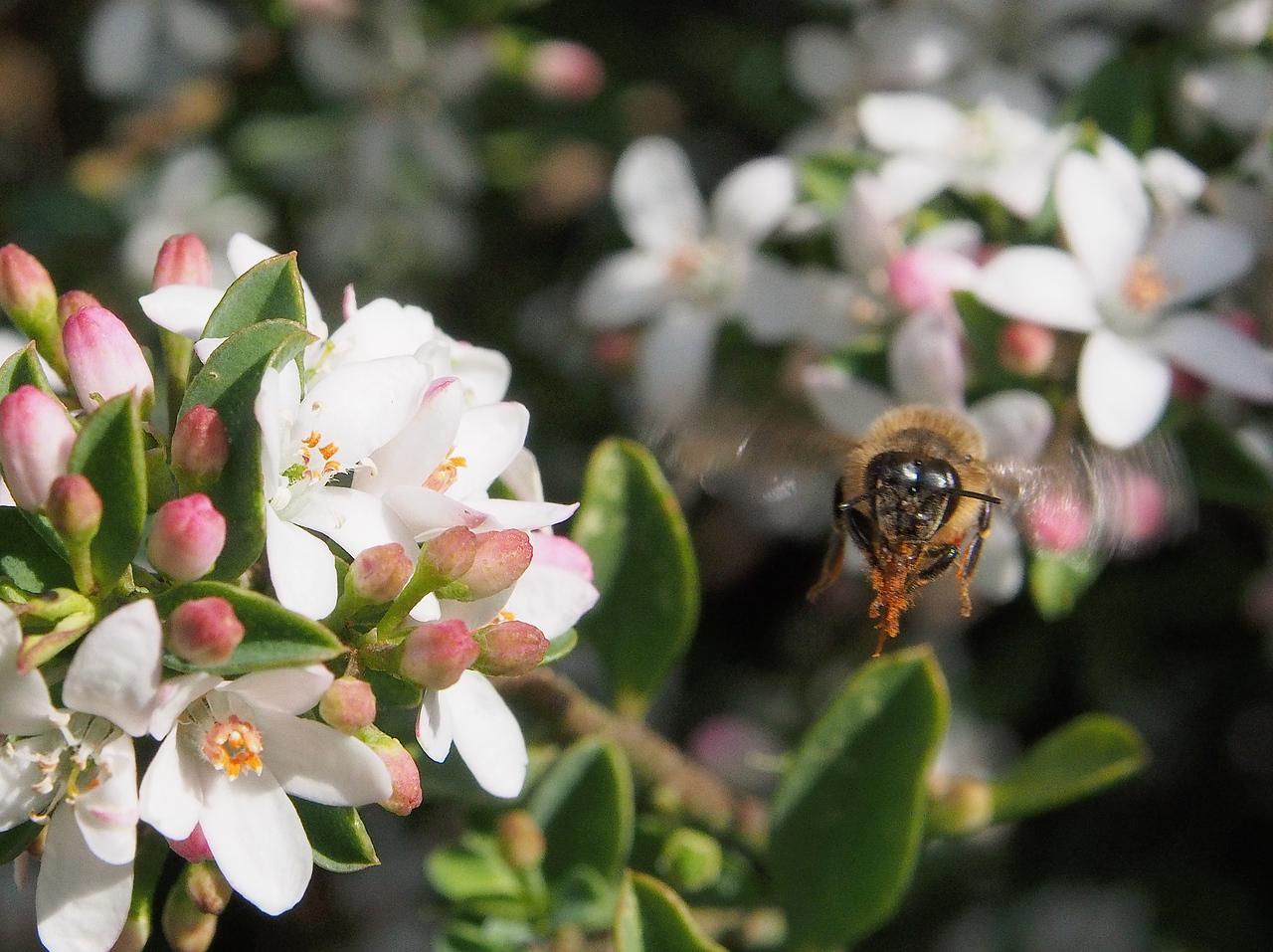 20130901_1215_1635 Kew Baptist bee