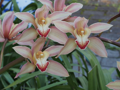 20131003_1702_4753 orchid