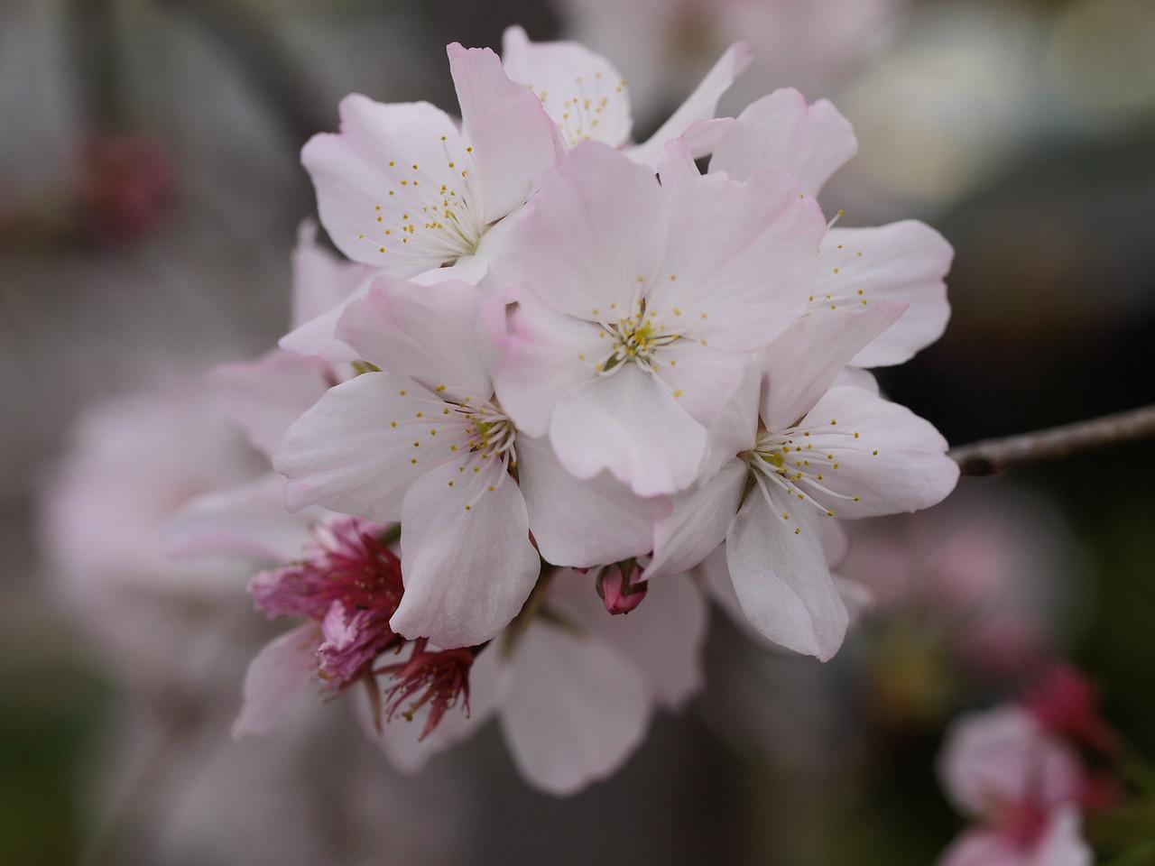 20130924_1114_0372 blossom